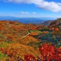 五竜高山植物園(秋)