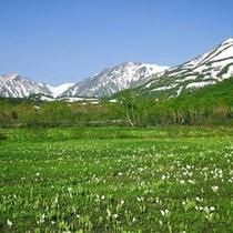 栂池ゴンドラ往復チケット付◆信州グルメバイキングプラン