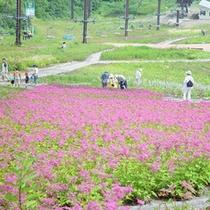 【五竜高山植物園】ゴンドラ・展望リフト往復乗車券付◆信州グルメバイキングプラン
