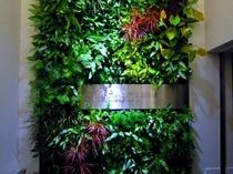 お客様の疲れを癒す壁面緑化