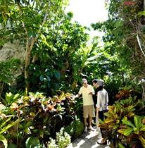 朝のやわらかな光に包まれながらのお散歩/植物観察ウォーキング