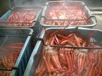 日本海育ちの紅ずわい蟹☆