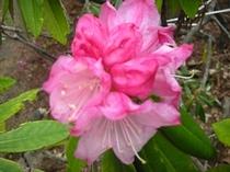 春の花 拡大