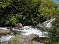新緑の竜頭の滝