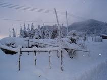 雪にうもれた銀河花菜園(冬)