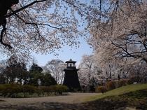 桜 真田丸・沼田城址公園 見ごろは4月中旬