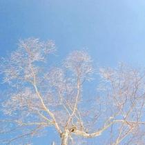 ☆周辺・景色_冬_木