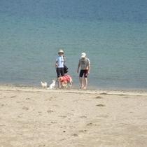 ビーチで一緒にお散歩