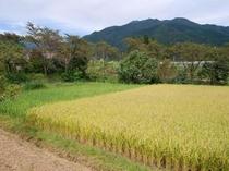 挽家の田んぼ