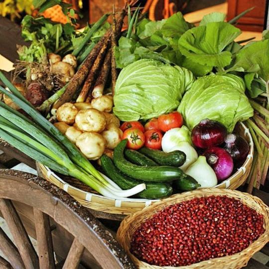 秩父ふるさと村で収穫した野菜 写真提供:楽天トラベル