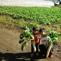 【秩父ふるさと村】大根収穫体験