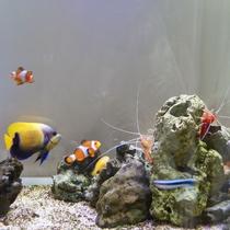 色鮮やかな熱帯魚達は見ていて飽きません