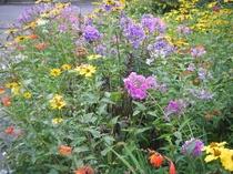 満開の花壇