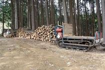 我が家のクヌギを使い椎茸原木栽培