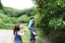 里山遊び、収穫体験、