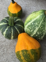 飾りかぼちゃ
