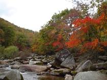 重端渓の紅葉(附馬牛町)