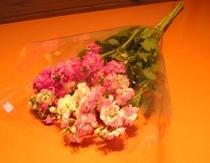 西岬のお花