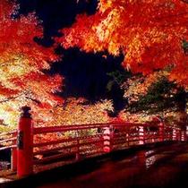 *【紅葉(一例)】中野もみじ山の紅葉は見事の一言です!
