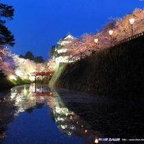 *弘前城さくらまつりライトアップ
