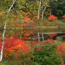 ■池面に映る紅葉