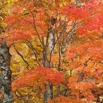 ■赤く染まる木々は色鮮やか