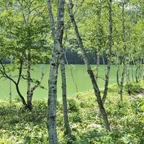■【夏】琵琶池。舗装されているので歩きやすく、お子様からお年寄りまで散策を楽しめます