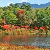 ■【秋】紅葉(一沼) 赤と緑のコントラストが素敵です。