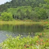 ■【夏】一沼。水面に映る緑がきれいです