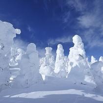■寒い日は樹氷が見れることも