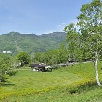 ■【夏】ワタスゲ平。自然の緑に心癒されます