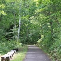 ■【夏】木々の間のトレッキングは涼しくて気持ち良い♪