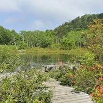 ■【夏】一沼。志賀高原はいくつかの沼があり、景色を楽しめます