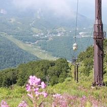 ■【夏】夏のスキー場は花々も楽しめます