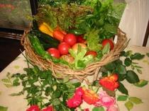 採り立ての高原野菜
