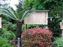 能満寺のソテツ