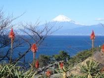 旧川越荘よりアロエと富士山 ピーディフライより徒歩8分
