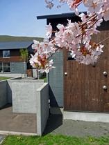 春・桜とコテージ