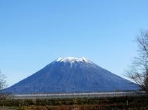 秋の羊蹄山