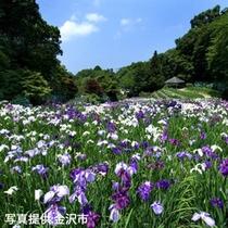 夏の卯辰山・花菖蒲園