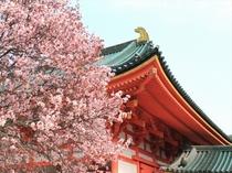 【春】京都の桜