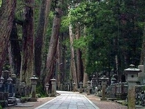 高野山奥の院参道:名だたる武将たちの墓石群が点在する