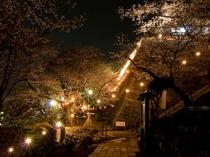 紀三井寺:ライトアップされた紀三井寺と桜(JRで約20分)