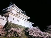 和歌山城:ライトアップされた和歌山城と満開の桜(路線バスで約10分)