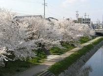 桜の岡崎城散策コース