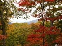 山太郎から見える景色