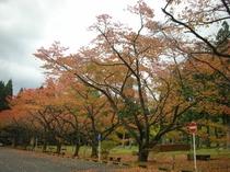 県民の森紅葉1