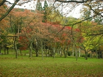 県民の森紅葉