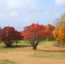 *紅葉に色付く木々達