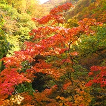 *秋の紅葉の様子